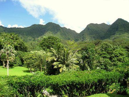 Lyon_Arboretum,_Oahu,_Hawaii